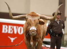 50 Reasons Why Being a Longhorn is Awesome