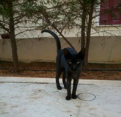 My little panther