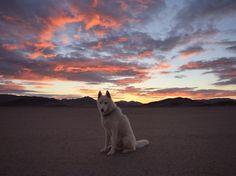 Mojave Desert, CA / November 2014. Wolfgang