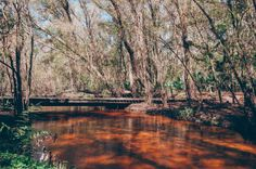 Little Manatee River State Park | 16 epic hiking spots in florida that are completely out of this world