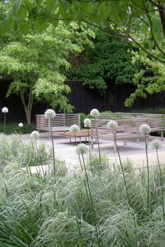 gorgeous white colour scheme - can anyone tell me the type of alliums and grasses used please?  Annie Pearce of Metamorphosis Design