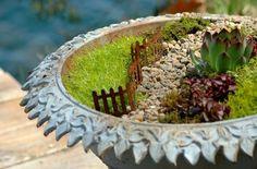 fairy garden in a bird bath! by robyn