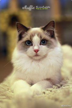 Prince Muffie Best Friends, Kitten, Pets, Animals, Prince, Kittens, Animais, Bestfriends, Kitty