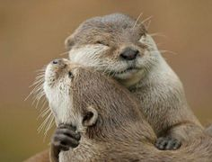 Hugs Otters <3