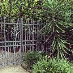 Bamboo steel gates. Tropical Queensland Australia