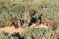 8 Healthy babies playing Gang Up, Big Family, Baby Play, Mammals, Habitats, Kangaroo, Adventure, Baby Games, Toddler Games