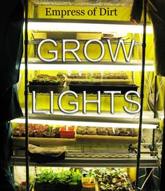 Inexpensive Grow Light Setup For Starting Seeds Indoors