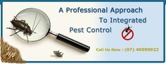 Safeway Pest Control is busy in offering pest control Cairns for the needs of the clients. Our professionals provide reliable services to you at very convenient rates. Click on the site for additional information.