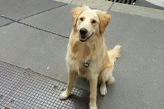 Charming - unser Bürohund
