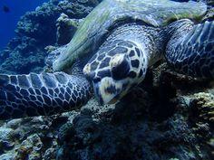 ななんと子カメに遭遇! - http://www.natural-blue.net/blog/info_2761.html