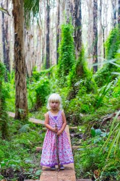 Walking amongst the Paperbark Forest, Agnes Water, Queensland