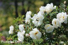 Fengshui puutarha - Kukkien symboliikka | Asuntomessut