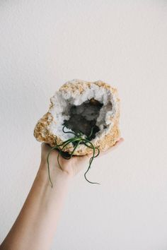 Monstrous Geode with Air Plant