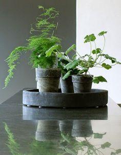 Svarta krukor och gröna växter