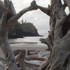 Cape Disappointment is surrounded by driftwood. In the summertime, people make stuff on the beach out of it.