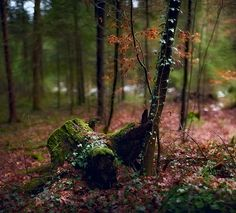 Meanwhile, in a beautiful forest