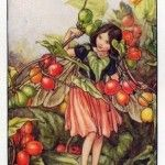 Black Bryony Flower Fairy
