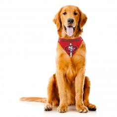 18154b485fe 102 Best Football Dogs images | Cat collars, Dog hoodie, Dog Harness