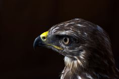 Eagle by Peter Orlický on 500px