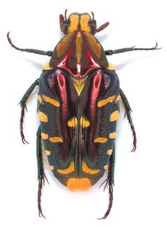 God's color combinations are by far the best. (i'm obsessed with beetles right now)