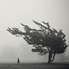 Árvores..sempre árvores