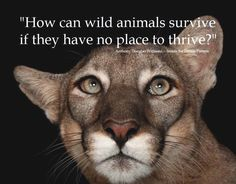 Don't villanize wild animals when they encroach on human communities. It's their world too!