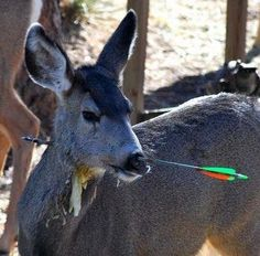 Deer hunting is a delicate balance of aggression and passiveness. You have to be just aggressive enough in your tactics that you kill the deer you are after, but just passive enough that you don't screw up and spook the deer. It's a difficult endeavor, but certainly one with great reward.