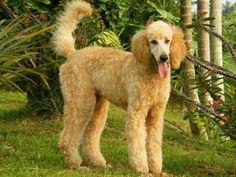 Kabur dari Rumah, Anjing Ini Ikut Lomba Maraton