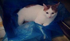 J likes plastic bags.