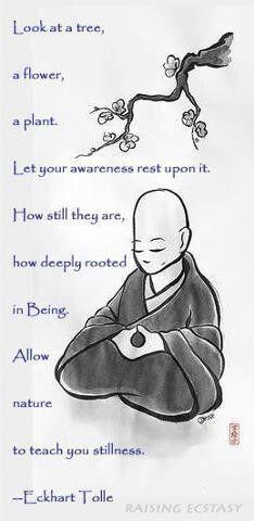 Allow Nature to Teach you Stillness. Hmmm