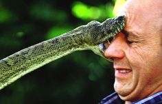 Awesome scripture ~ Surely the serpent will bite without enchantment. Image from topnews. Funny Fails, Funny Memes, Hilarious, Tony Robbins, Poisonous Snakes, Dangerous Animals, Odd Couples, Mundo Animal, Reptiles And Amphibians