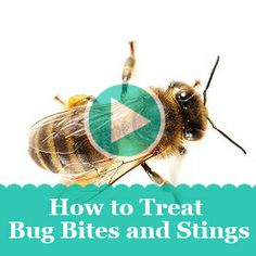 Spiders and ticks and bees—oh my! Watch as our medical pro explains how to treat the most common bug bites.
