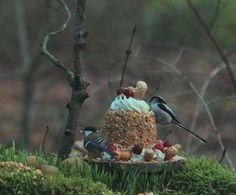 vogeltaart.nl