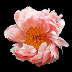 Peony picture for bedroom.