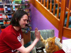 A high-five from Bob the cat #bobthecat #cat