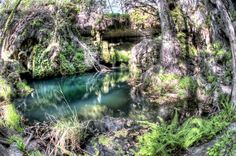 Westcave Preserve | A natural treasure of the Texas Hill Country 40 miles southwest of Austin