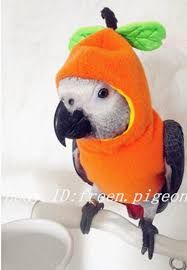 Image result for how to make bird toys for parrots
