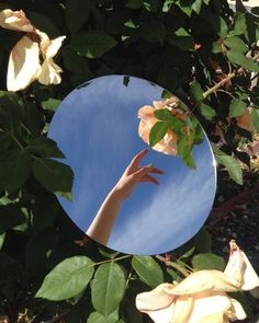 Ideas for plants aesthetic inspiration Mirror Photography, Creative Photography, Outdoor Fashion Photography, Portrait Photography Poses, Reflection Photography, Framing Photography, Conceptual Photography, Nature Photography, Aesthetic Photo
