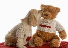 Happy Teddy Day Teddy Bear Dog Wallpaper