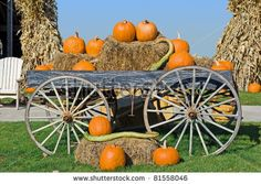 Straw and Pumpkin Lantern Halloween Photo Backdrop Studio Photography Backdrop Background Studio Props Young Living, Beet Brownies, Low Fat Cookies, Peach Pork Chops, Best Pumpkin Patches, Fat Burning Diet, Halloween Photos, Halloween Camera, Healing Herbs