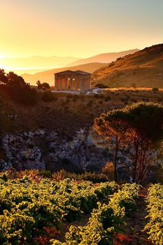 Doric Temple, Segesta, Sicilia