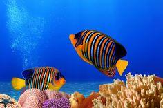 fotografías-del-fondo-marino-peces-de-colores-arrecifes-y-corales-en-los-oceanos