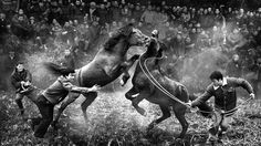Leaping wildebeest and cuddling cats: the 2014 Sony World Photography Awards shortlist