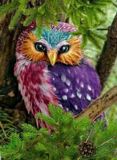 All Animals Pictures, Owl Pictures, Owl Art, Bird Art, Fake Birds, Unicorn And Fairies, Beautiful Owl, How To Attract Hummingbirds, Cute Owl