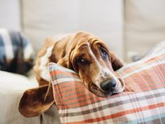 I love basserr hounds. They are so loving and tender, yet so playful.