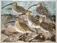 lisa hooper, curlews Bird Artwork, Sketch Painting, Naive Art, Watercolor Bird, Textile Artists, Wildlife Art, Linocut Prints, Graphic Illustration, Illustrations