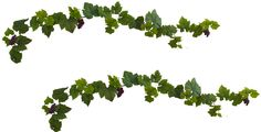 Grape Leaf Deluxe Garland with Grapes