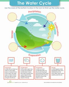 The Water Cycle (C2, W4)