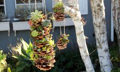 Small Garden Project: Succulent-Planted Pinecones for CreativeLive
