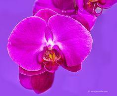 Orquidea by Juan Mario on 500px